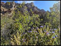 Pretty Purple flowers along the Rock Canyon Trail