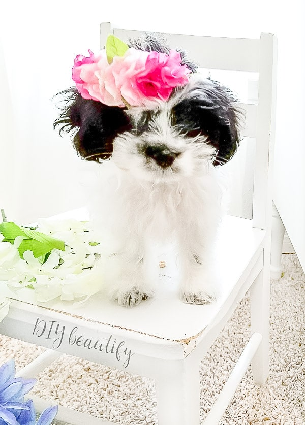 tiny flower crown on puppy