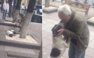 62χρονος βρίσκει τον χαμένο σκύλο του μετά από 3 χρόνια