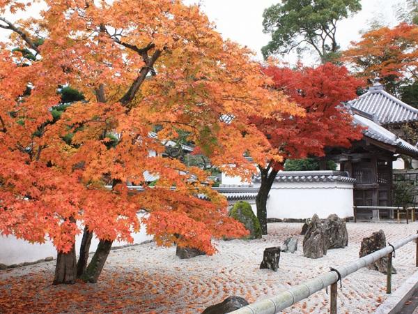 วัดโคเมียวเซ็นจิ (Komyozenji Temple) @ www.kyushuandtokyo.org