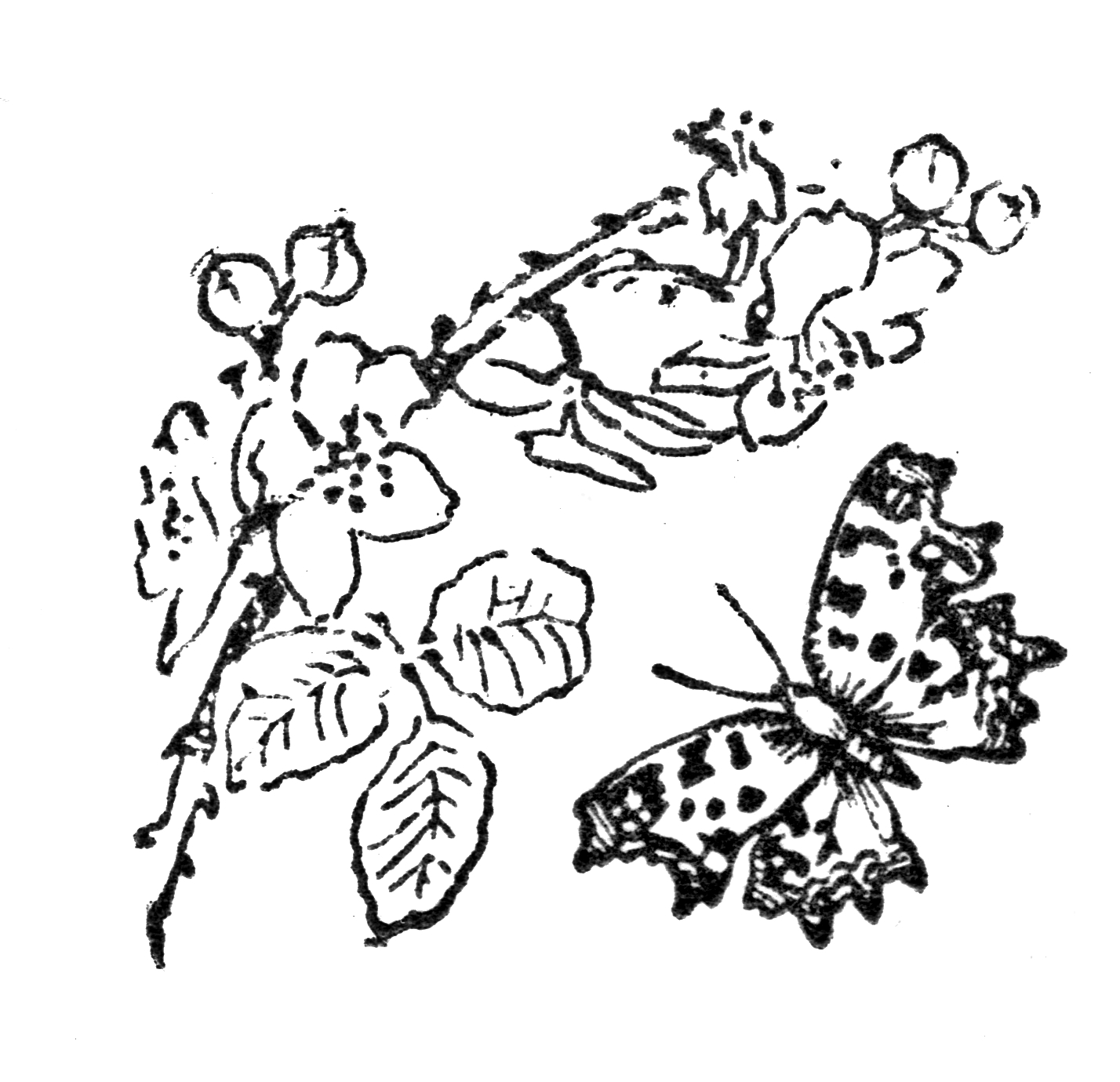 Butterflies, Butterfly template and Printable butterfly on ...