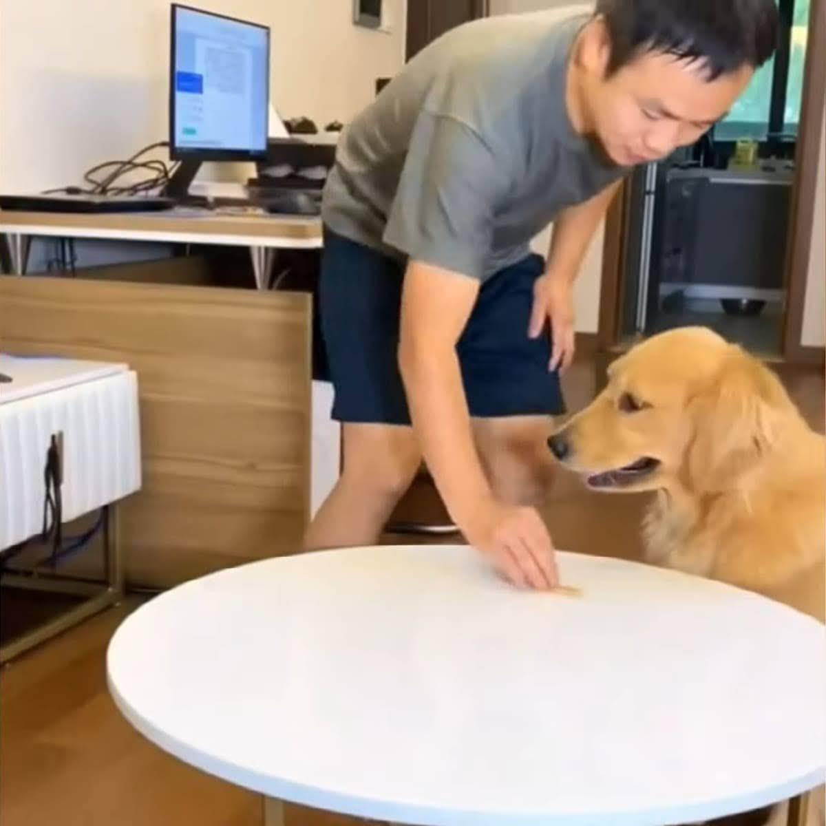 Best Pets of The Month: 2020年11月に癒やされた微笑ましい動物ビデオの総集編