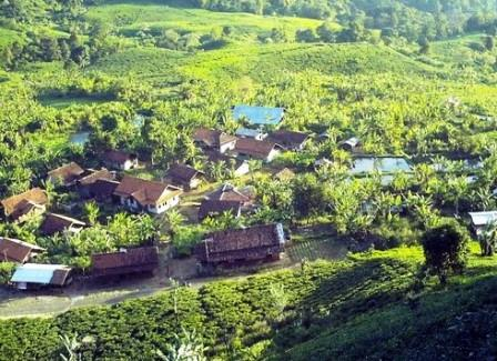 kawasan perkebunan tеh Margawindu