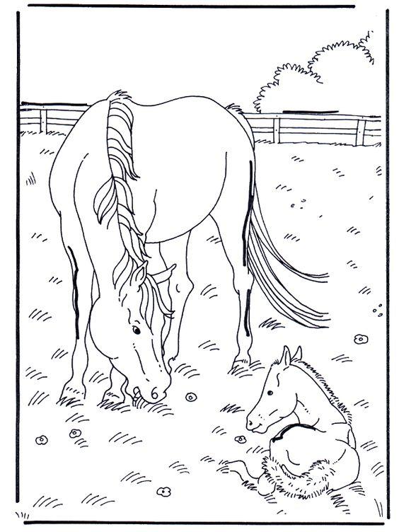 Tranh tô màu hai mẹ con ngựa trên đồng cỏ