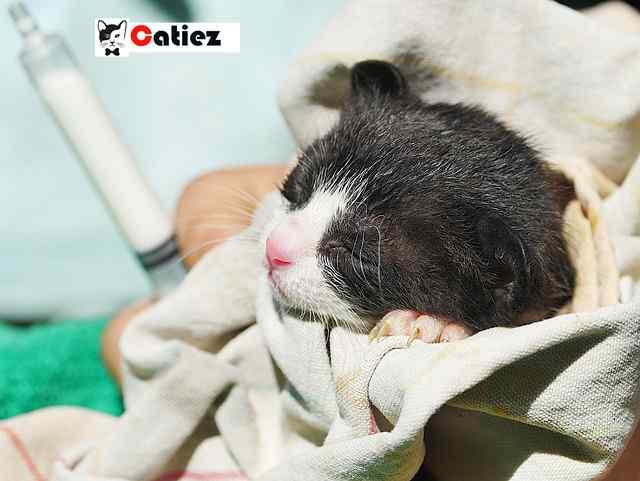 how much do you feed a newborn kitten