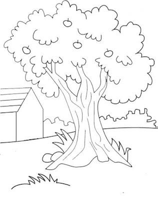 Gambar Sketsa Pohon Apel
