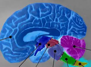 wiki sanatatea creierului după covid 19