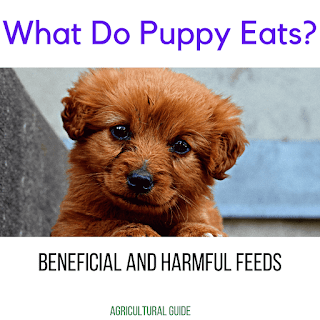 What Do Dogs Puppy(Baby Dog) Eat?-Beneficial And Harmful Foods