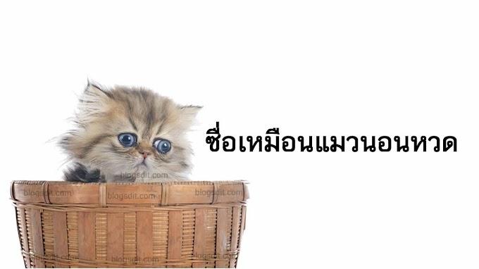 ซื่อเหมือนแมวนอนหวด หมายถึงอะไร ?