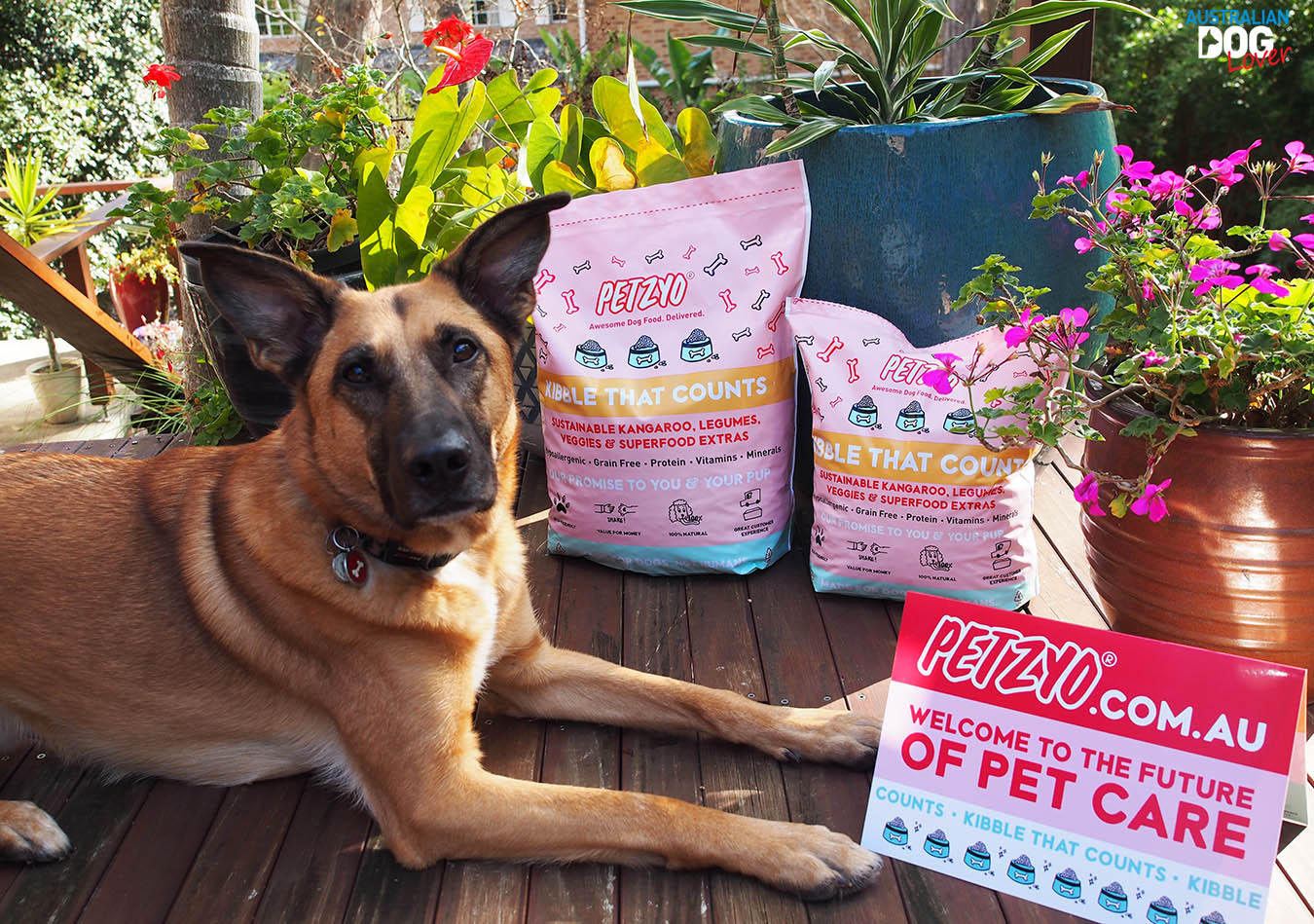 Petzyo Grain Free Dog Food Review Australian Dog Lover