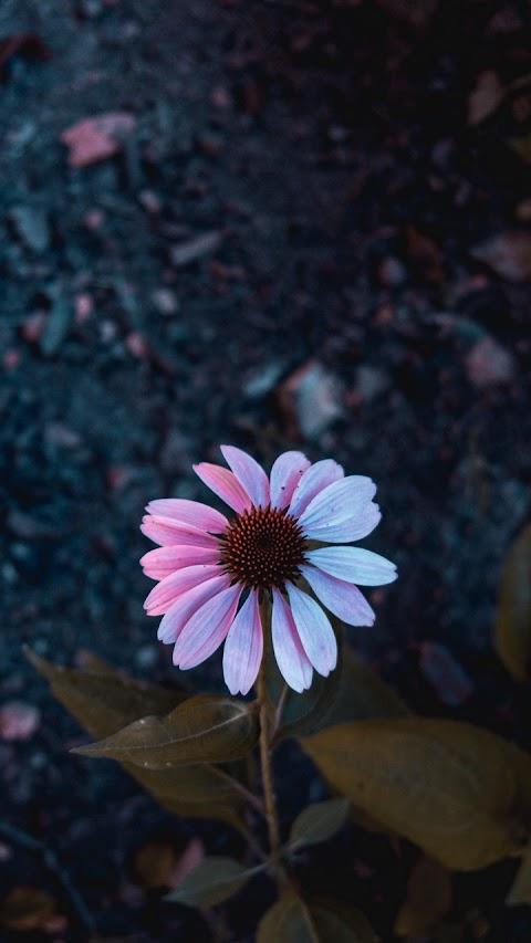 Cánh hoa đẹp giữa rừng