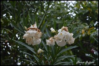 Flores Fotografía Graciela Guffanti