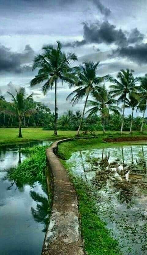 Gambar Pemandangan Alam Pedesaan