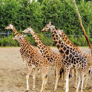 Hop on Hop Off Dublin: Dublin Zoo in Phoenix Park