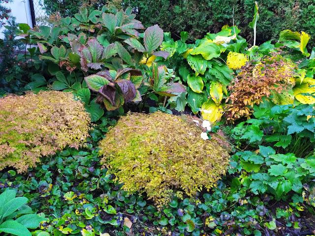 Jesienny ogród, rośliny przebarwiające się jesienią