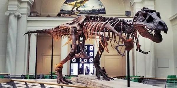 dinosaur skeleton museum, dinosaur fossils,