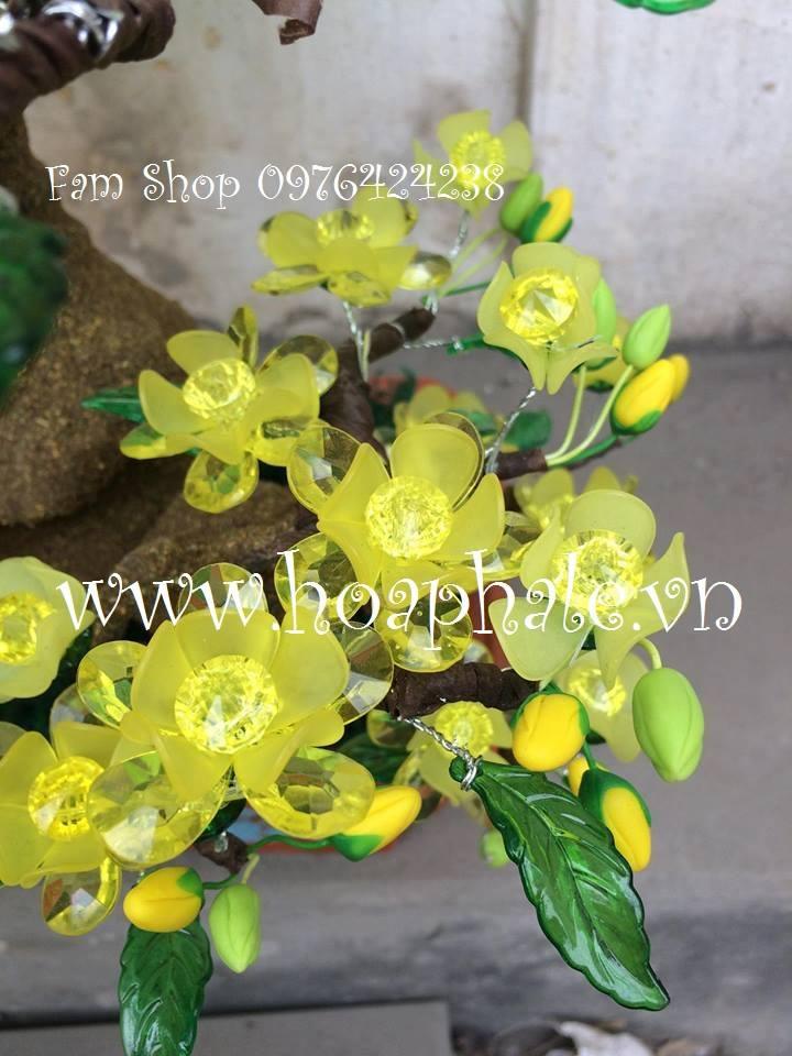 Canh hoa lam goc bonsai mai dao o Dang Van Ngu