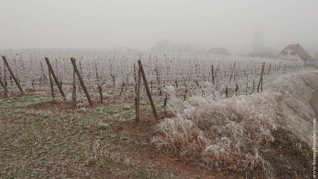 Mittelbergheim viñedos Alsacia Navidad