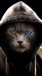Cat Hood Mobile HD Wallpaper