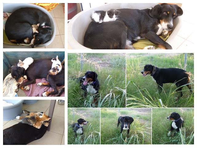 ACT! Animal Care Thassos