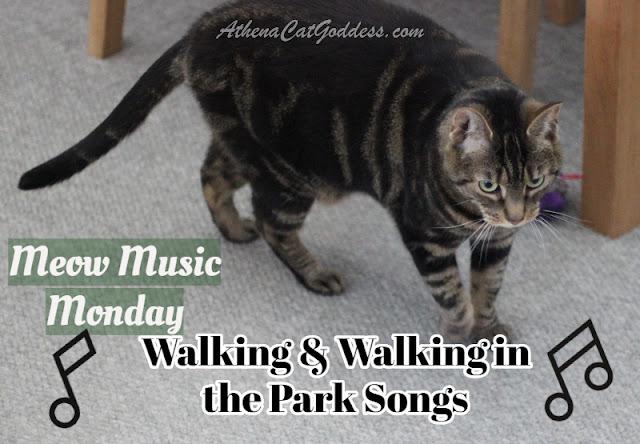 tabby cat walking on carpet