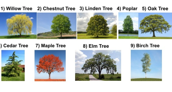 Pick A Tree To Learn Your Life Forecast For 2018