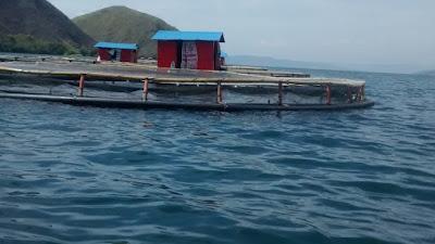 Persoalan Kerambah di Danau Toba Ancam Pariwisata, Bagaimana Pak Luhut?