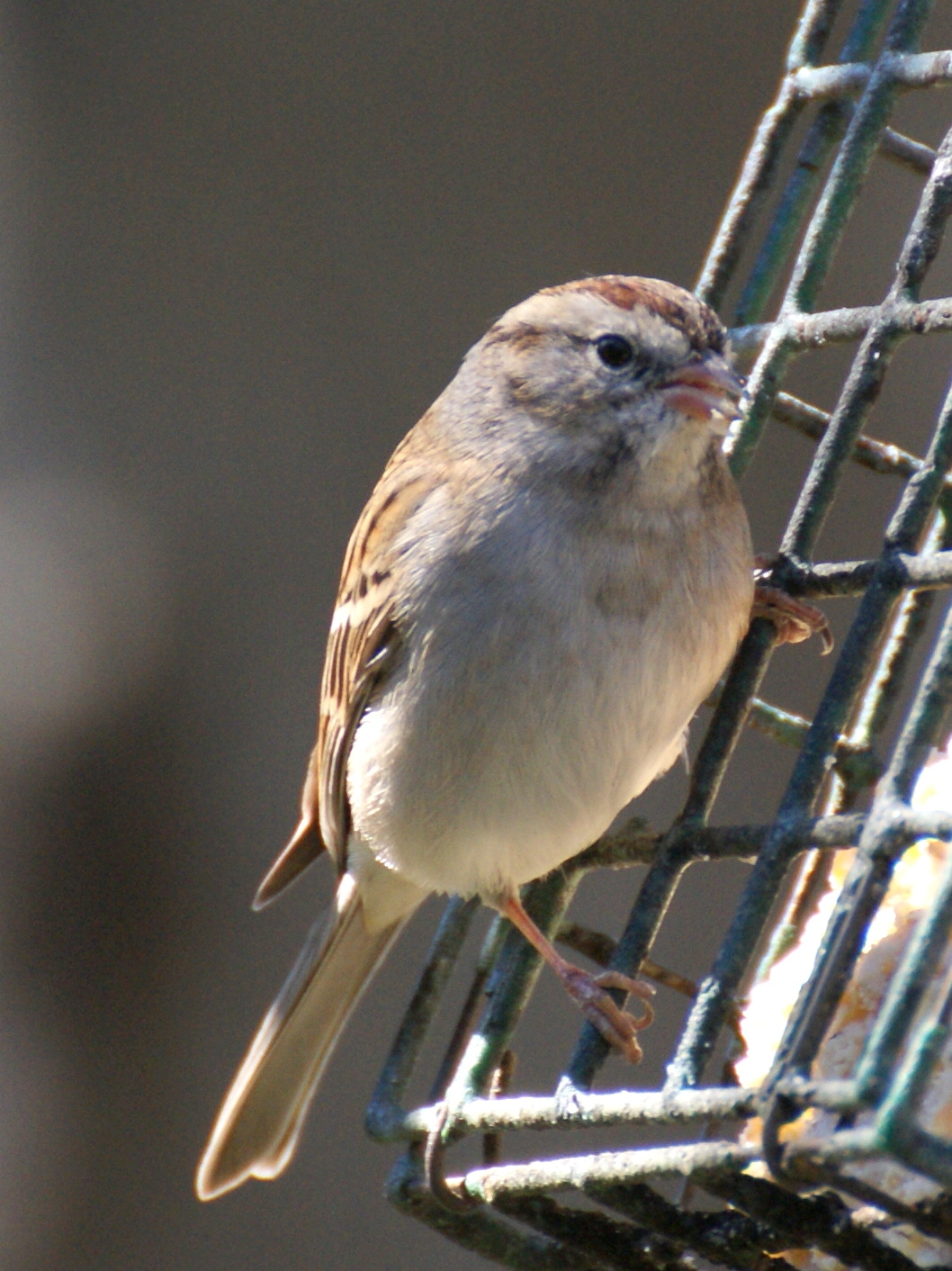 SE Texas Birding & Wildlife Watching: Backyard Bird Count