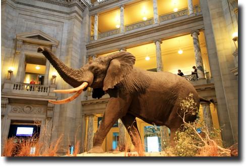 Museo Nacional de Historia Natural - Estados Unidos