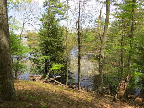 Hamlin Lake backwaters