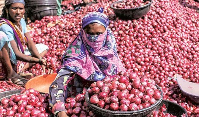 कांदा निर्यातबंदीने शेतकरी अडचणीत, ग्रामीण अर्थव्यवस्था धोक्यात