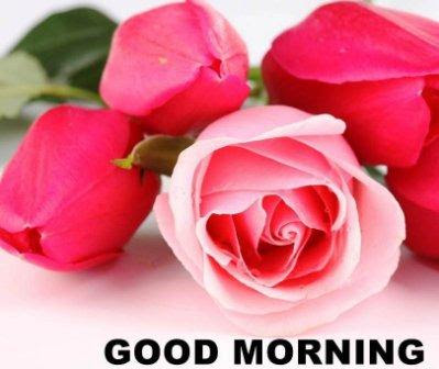 good morning romantic roses pictures for lover