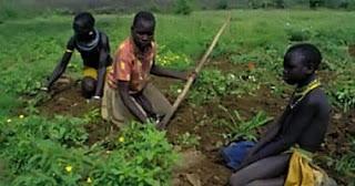 دور المشاريع الزراعية في الاقتصاد