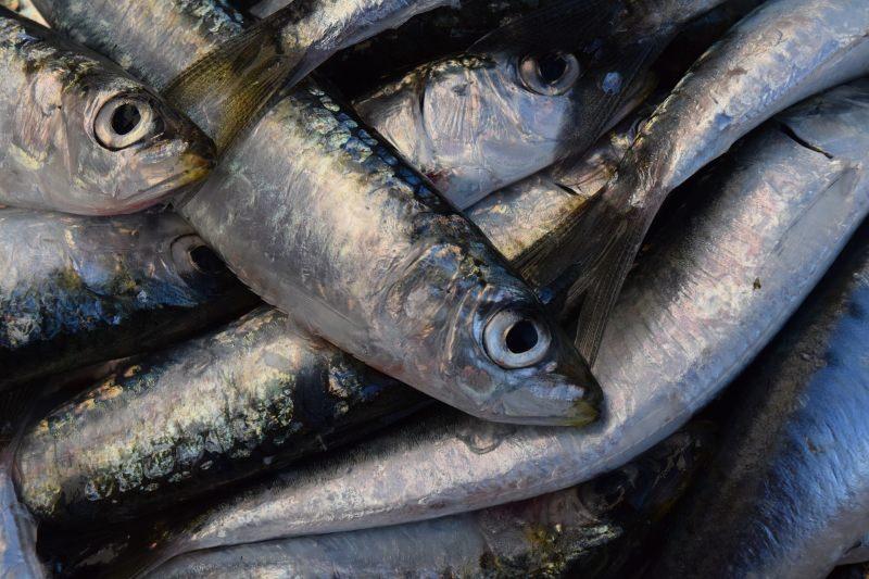 muitas sardinhas empilhadas
