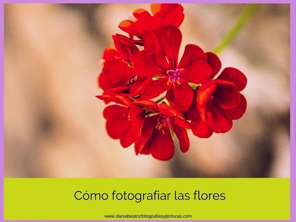 consejos-para-capturar-unas-flores-impresionantes
