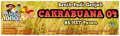 Jual Benih Padi CAKRABUANA04 (CB04)