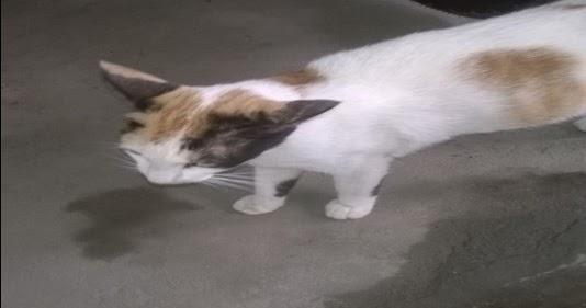 Laporan Wawancara Kucing