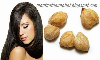Kasiat Kemiri Untuk Kesehatan Rambut Dan Kecantikan