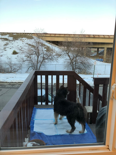 dog on a balcony looking at a snowy road