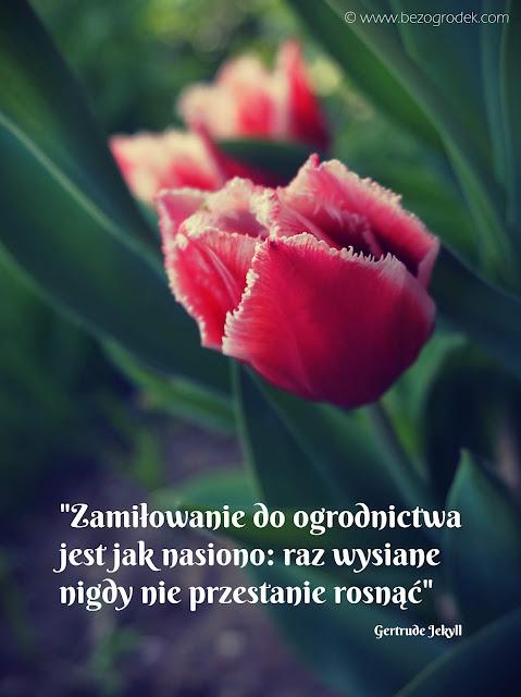 cytaty ogrodnicze