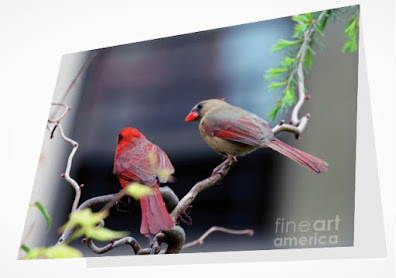 This is a screen shot of a card which I'm selling on Fine Art America. It features a couple of cardinals perched on a branch. The female (brownish) is on the right while the male (red) is on the left. Info re this card is @ https://fineartamerica.com/featured/cardinal-love-3-patricia-youngquist.html?product=greeting-card