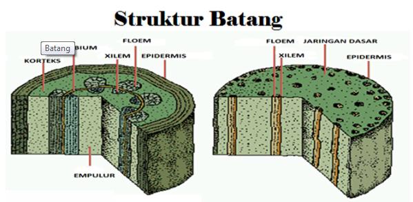 Pengertian Batang Beserta Fungsi, Sifat, Macam dan Struktur Batang