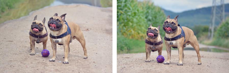 Hundefotografie - Hunde auf Augenhöhe aus der richtigen Perspektive fotografieren