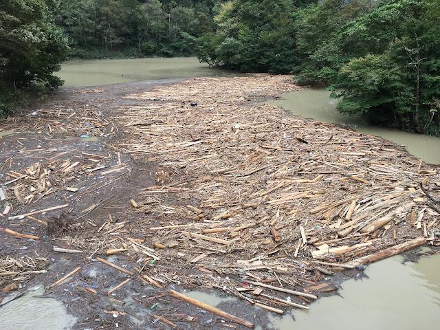 台風19号の影響により流木で埋まった名栗湖