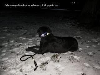 odblaskowa obroża dla psa DIY, szelki dla psa