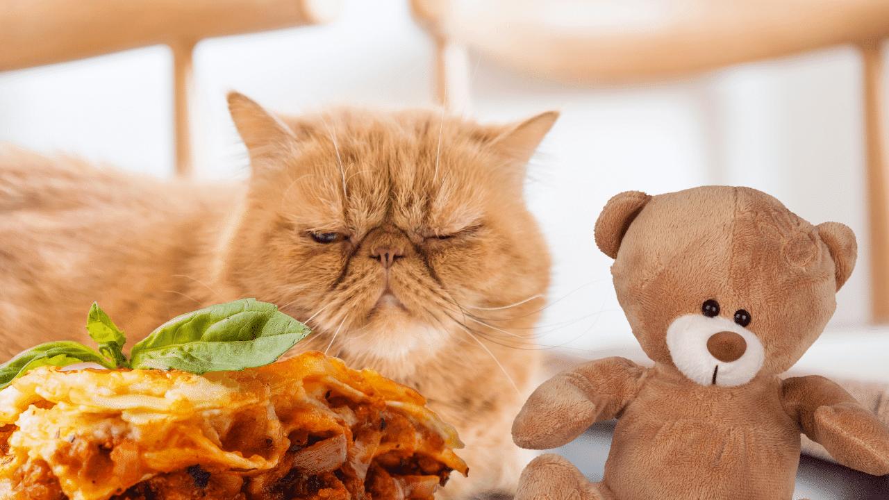 Garfield se inspiró en un gato exótico