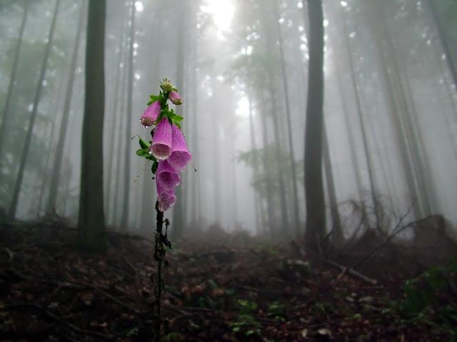 Blomst i mørk tåget skov
