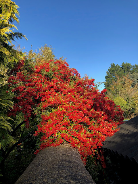 colours of autumn, Chez Maximka