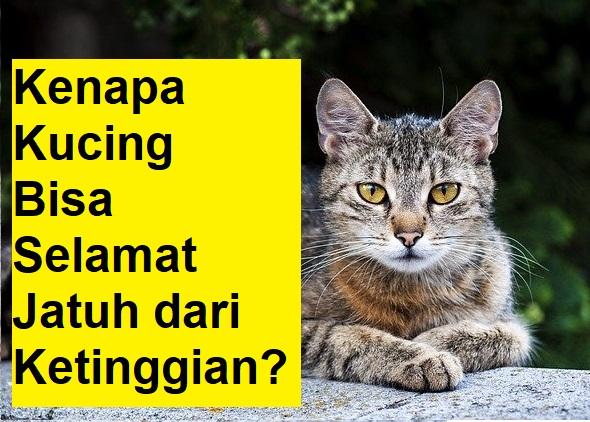 Kenapa Kucing Bisa Selamat Jatuh dari Ketinggian