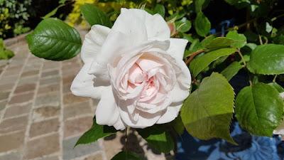 Rose-Jardin-de-grandville-blog-paris-a-louest